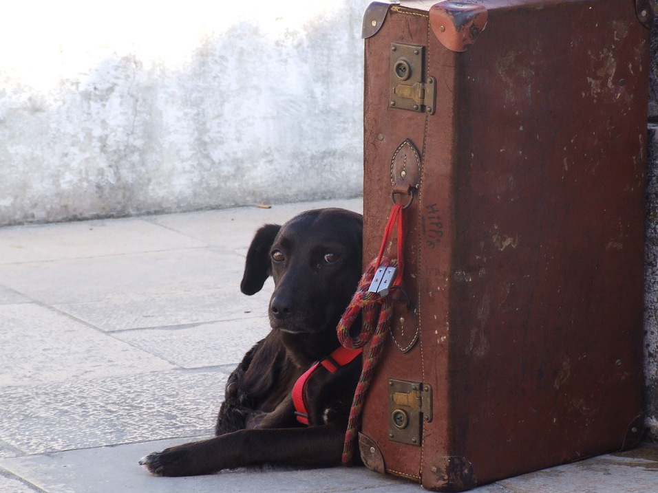 Dog leaning on suitcase