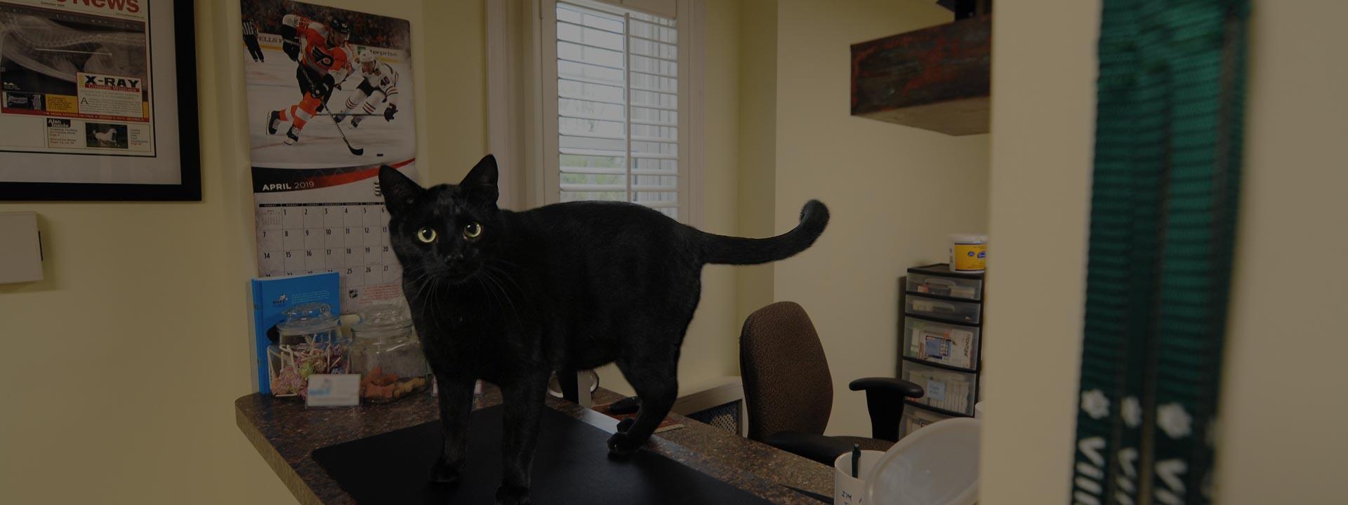 black cat standing on front desk of hospital