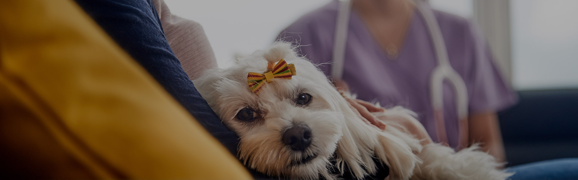 small white dog with bow in fur
